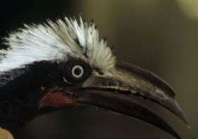 Study Warns Climate Change and Deforestation will Lead to Declines in Global Bird Diversity