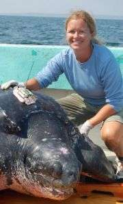 Leatherback Turtle Tagging