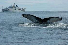 Scientists Study Humpback Whales
