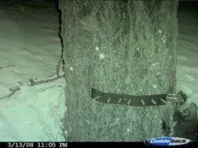 Additional evidence of wolverine found in the Tahoe National Forest