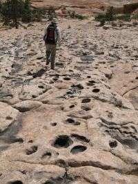 'A dinosaur dance floor': Numerous tracks at Jurassic oasis on Arizona-Utah border