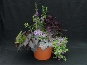 Americans hard to contain on potted plant expenditures