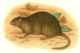 Death by hyperdisease: DNA detective work explains the extinction of Christmas Island's native rats