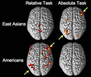 Culture influences brain function