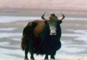 Heart-healthy yak cheese