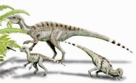 Heterodontosaurus, Adult and Juvenile