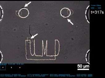 Manipulating Cells on a Chip