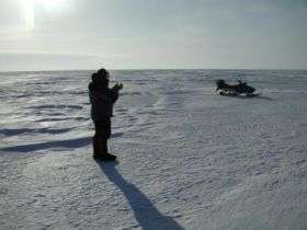 Older Arctic sea ice replaced by young, thin ice