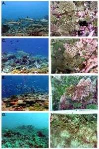 Scripps expedition provides new baseline for coral reef conservation