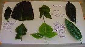 New Spray Improves Plants' Cold Tolerance