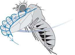 Micro flying robots can fly more effectively than flies