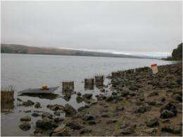 Invasive species threaten critical habitats, oyster among victims