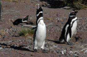 Penguins marching into trouble