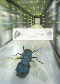 Robotics insights through flies' eyes