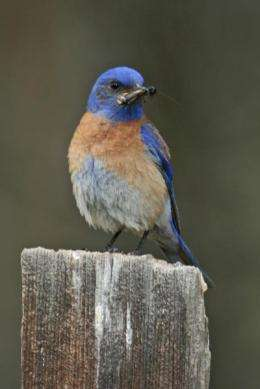 Sierra Nevada birds move in response to warmer, wetter climate