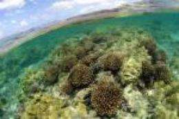The fragility of the world's coral is revealed through a study of the Northwestern Hawaiian Islands