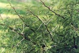 Climate change may wake up 'sleeper' weeds