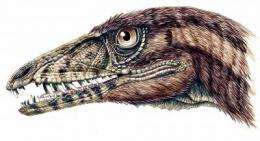 Early carnivorous dinosaurs crossed continents
