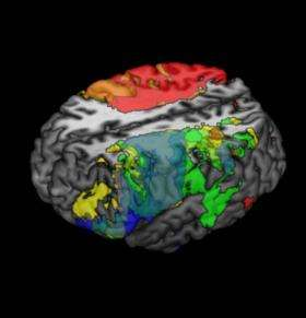 Neuroscientists map intelligence in the brain
