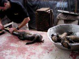 The first DNA barcodes of commonly traded bushmeat are published