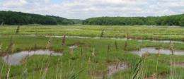 Climate change may spell demise of key salt marsh constituent