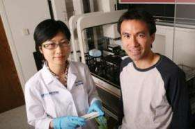 Researchers disrupt biochemical system involved in cancer, degenerative disease
