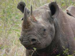 Conservation targets too small to stop extinction