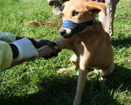 Researchers study genetic evolution of African dogs