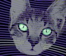 Quantum cat's 'whiskers' offer advanced sensors