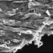 Ancient muscle tissue extracted from 18 million year old fossil