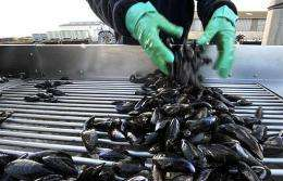 A new study says underwater animals, such as mussels, fart greenhouse gaS