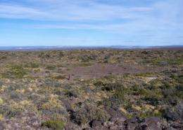 A person stands in the basaltic Filu-co plateau, in one of the around 100 craters existing in the Argentine Patagonia