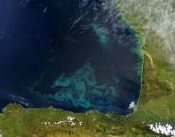 Clouds of blue and green phytoplankton swirl and twine in the waters of the Bay of Biscay
