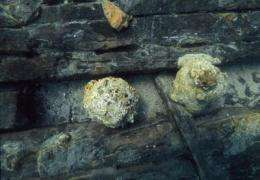 Could cannon balls from the early 19th century sink warships?