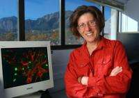 CU-Boulder Professor Unraveling Mystery of Treating Chronic Pain