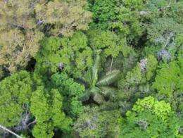 DNA 'barcode' for tropical trees
