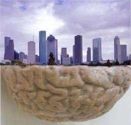 Ego City: Cities organized like human brains