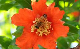 Give thanks to the bee