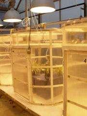 Houseplants cut indoor ozone