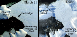Ice Bridge Supporting Wilkins Ice Shelf Collapses