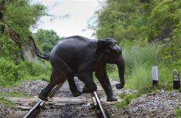 India to move all zoo elephants to wildlife parks (AP)