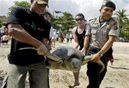 Indonesia rejects Bali plan for turtle sacrifices (AP)