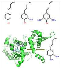 Making New Enzymes to Engineer Plants for Biofuel Production