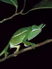 Museum specimens aid conservation effort in Madagascar