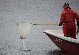 No Asian carp found yet in Ill. fish kill (AP)