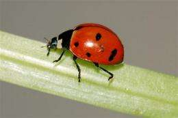 NY researchers give ladybugs a birds-and-bees talk (AP)