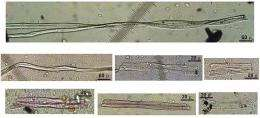 Oldest-known fibers to be used by humans discovered