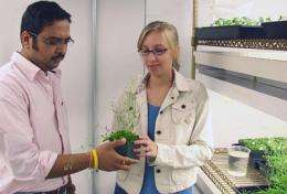 Plants recognize siblings, and UD researchers have discovered how