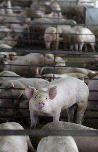 Pressure rises to stop antibiotics in agriculture (AP)