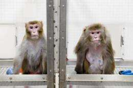 Reduced diet thwarts aging, disease in monkeys
